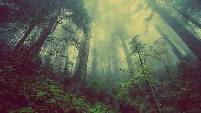 Quel est le bois le plus précieux?
