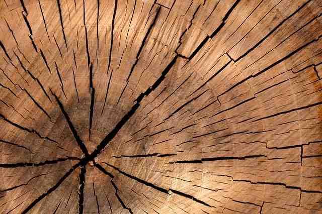 Quels sont les bois précieux ?